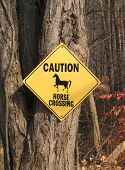 horse crossing sign on a tree at a state park poster