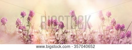 Red Clover, Flowering Red, Wild Red Flower In Meadow