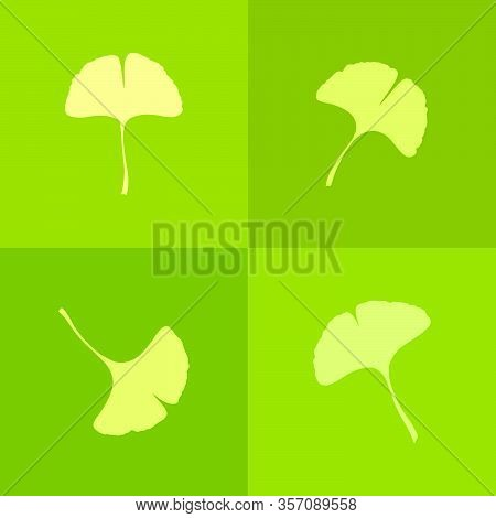 Green Ginkgo Or Gingko Biloba Leaves Icons Set. Nature Botanical Vector Illustration, Herbal Medicin