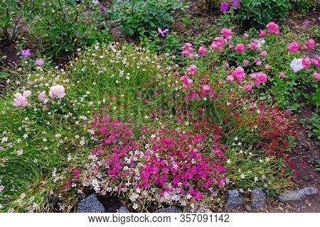 A Large Number Of Different Flowers In The Flowerbed In The Park. Flower Bed Decoration In The Botan