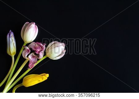 Vintage Realistic Closeup Of Colorful Wilted Flowers Tulips For Wallpaper Design. Vintage Design Ele