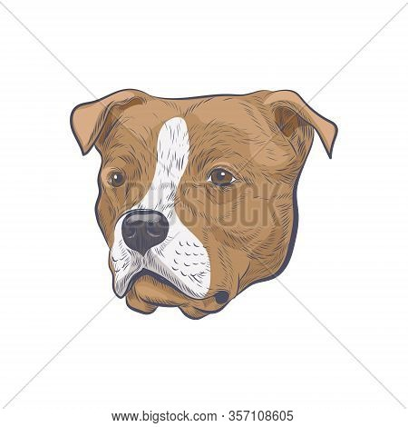 Amstaff Dog Head Hand Drawn Vector Sketch. American Staffordshire Terrier Isolated On White Backgrou