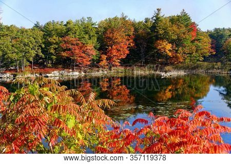 Striking Fall Foliage By The Pond Near Thousand Islands, New York, U.s.a