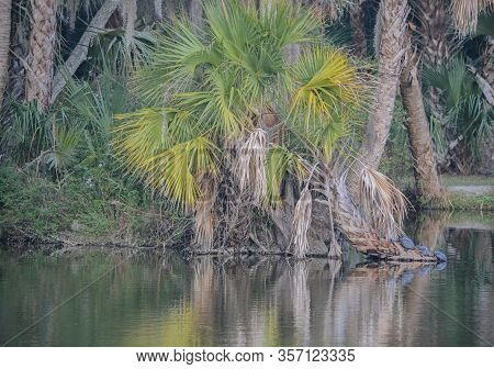 Reflection Of Shoreline At Kathryn Abbey Hanna Park, Duval County, Jacksonville, Florida.