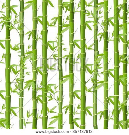 Bamboo Vector Seamless Pattern. Green Bamboo Grove On A White Background. Seamless Japanese Style Te