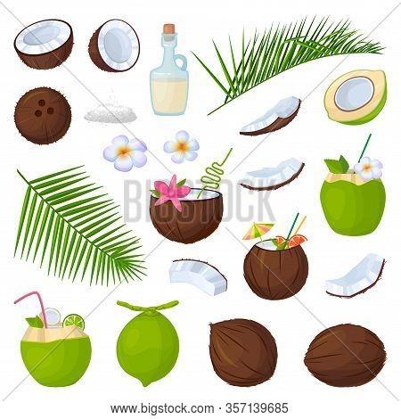 Coconut Isolated Cartoon Set Icon. Vector Illustration Coco On White Background. Vector Cartoon Set
