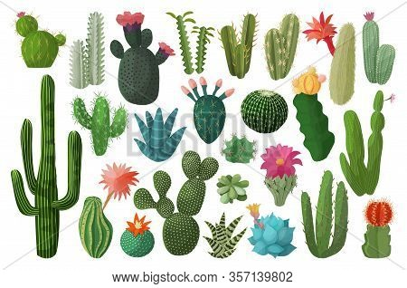 Cactus Isolated Cartoon Set Icon. Vector Illustration Mexican Cacti On White Background. Vector Cart