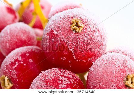 fresh frozen fruit in ice.