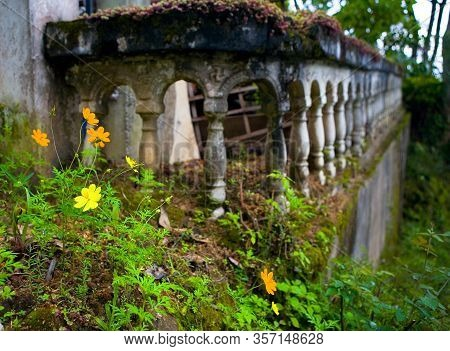 Beautiful Flowers Grow On A Background Of Stone Balusters. Architectural Elements.
