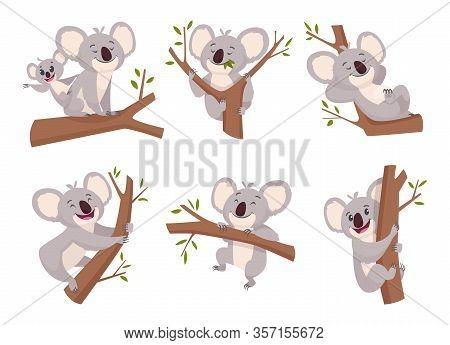 Koala Bear. Wildlife Cute Furry Animal From Australia Zoo Characters Cartoon Shower Symbols Vector C