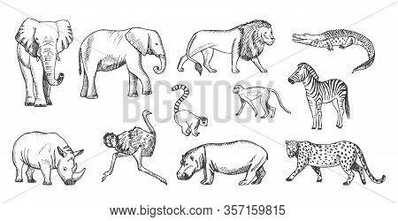 Sketch Animal. African Wild Savanna Fauna. Isolated Lion, Elephant, Leopard And Crocodile Vector Ill