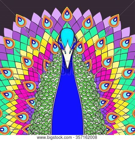 Peacock With Flowing Tail Colorful Cartoon Drawing, Front View. Beautiful Multicolor Bird With Big O