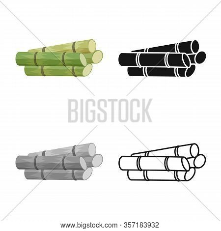 Isolated Object Of Cane And Sugar Symbol. Graphic Of Cane And Plantation Stock Vector Illustration.
