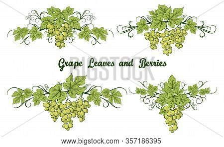 Set Of Grape Bunches, Green Berries And Leaves On White Background. Vector