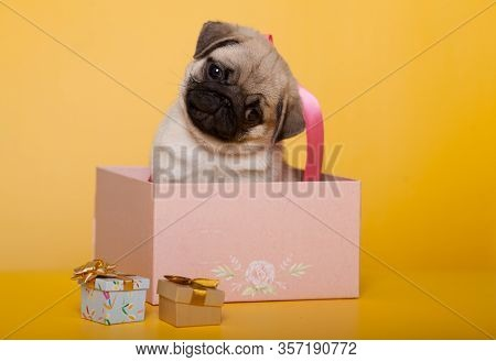 Funny Pug Puppy In A Box With A Bow As A Gift On A Yellow Background. Isolate. The Concept Of A Gift