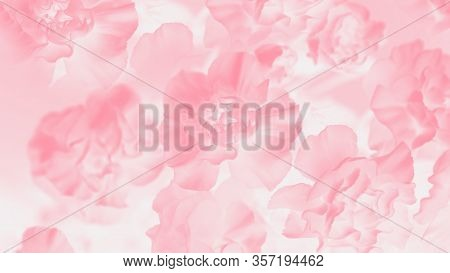 Pale Pink Abstract Background. Floral Gradient Background, Delicate Carnation Flowers Pattern, 16:9