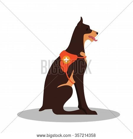Dogs Rescuer, Doberman Breed. Cadaver Dog For Finding People.
