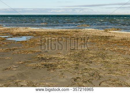Lake Kamyslybas Or Kamyshlybash, Large Saltwater Lake In The Kyzylorda Region, Kazakhstan. Algae On