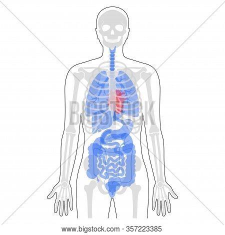 diagram of male skeleton human man skeleton vector   photo  free trial  bigstock  man skeleton vector   photo  free trial