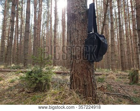 Bag In The Woods. Bag On The Tree. Lost Bag