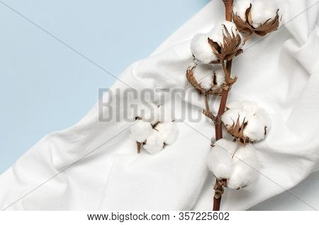Flat Lay Beautiful Cotton Branch And White Natural Cotton Fabric On Blue Background Top View Copy Sp