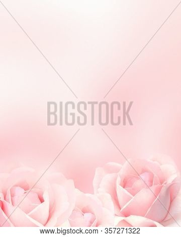 Blurred vertical background with three roses of pink color. Copy space for your text. Mock up template. Can be used for wallpaper, wedding card, web page banner
