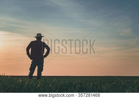 Rear View Of Satisfied Farmer In Wheatgrass Field, Proud Of His Success, Copy Space Included
