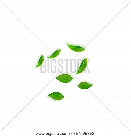 Falling Green Leaves. Fresh Tea Neat Leaves Flying. Spring Foliage Dancing On White Background. Actu