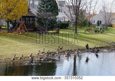 Joliet, Illinois / United States - December 2, 2017: A Flock Of Migrating Canada Geese (branta Canad