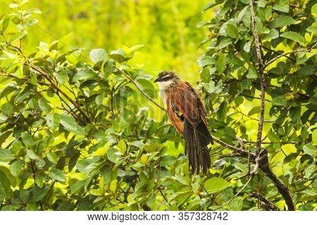 Big Bird On A Green Tree, Tanzania