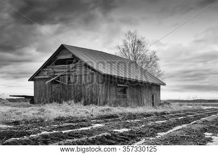 An Abandoned Barn House Stands By The Fields At The Northern Finland. There Is Still Some Snow On Th