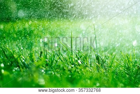 Grass with rain drops. Watering lawn. Rain. Blurred Grass Background With Water Drops closeup. Nature. Garden, gardening backdrop. Environment concept