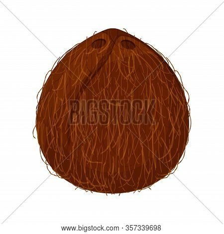 Coconut Brown Fruit Isolated On White Background, Illustration Coconut Brown For Clip Art, Coconut S