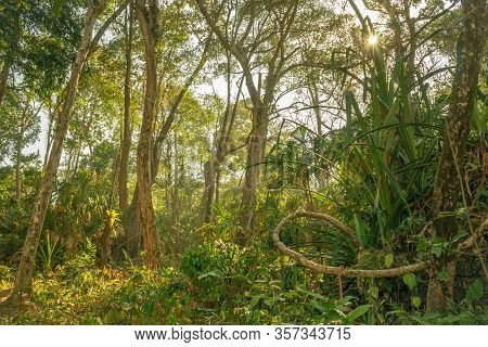 Pristine Untouched Tropical Forest And Bright Sun Beams Over The Jungle In Sawarna, Banten, Java Isl