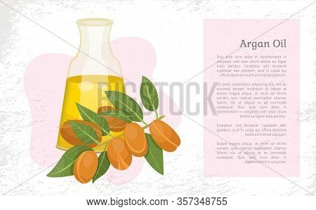 Glass Bottle Contains Golden Liquid Inside. Branch With Brown Nuts Of Argania. Text, Information Abo