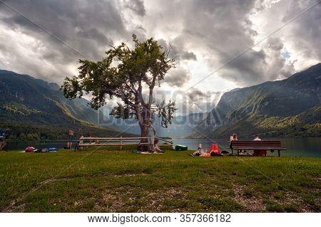 Bohinj, Slovenia - August, 03: View Of The Famous Tree Next To The Bohinj Lake On August 03, 2019