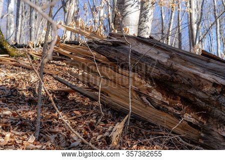 Fallen Tree In The Forest.fallen Tree In The Forest
