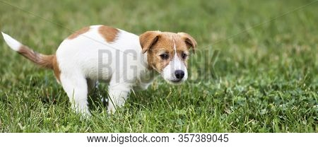 Cute Dog Puppy Doing His Toilet, Defecated, Pooping, Pet Excrement, Banner