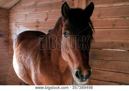Brown Horse In The Stable. Horse In His Aviary. Stable With Animals.