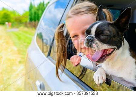 Yawning Boston Terrier Dog And Little Girl Looking Out The Open Car Window