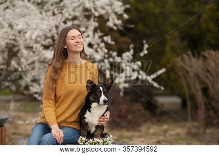 Beautiful Girl Owner In A Yellow Sweater With Her Dog Welsh Corgi Cardigan In Spring On A Walk. Copy