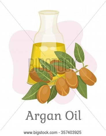 Argan Oil Branch Of Nuts With Leaves And Liquid In Glass Isolated On White. Card With Natural Ingred