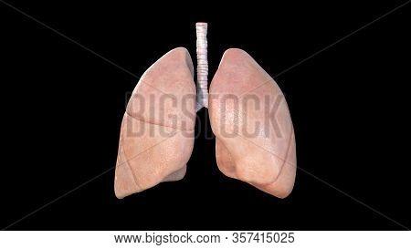 Lungs Anatomy, Human Respiratory System, Pneumonia, Coronavirus, Covid-19, Autopsy Medical Concept.