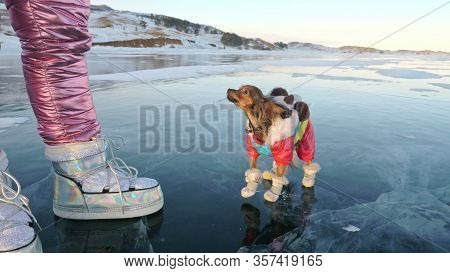 Toy Terrier In Funny Clothes And Funny Shoes Plays With Ball On Beautiful Ice In Cracks. Mom And Dau