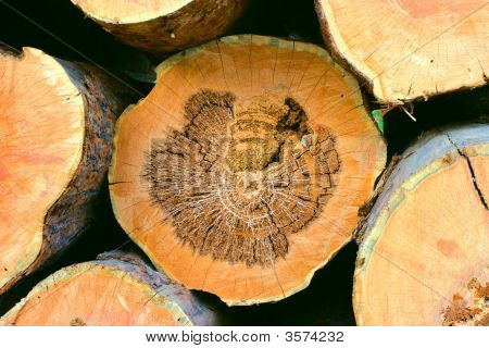 Pine Saw Ends