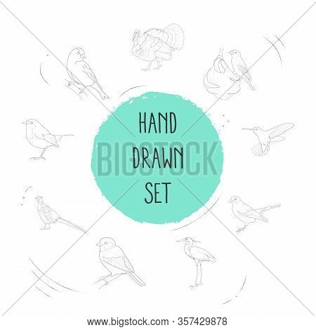 Set Of Ornithology Icons Line Style Symbols With Weaver Bird, Goldfinch, Hummingbird And Other Icons