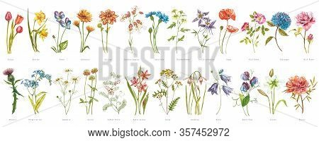 Watercolor Collection Of Hand Drawn Flowers And Herbs. Botanical Plant Illustration. Vintage Medicin