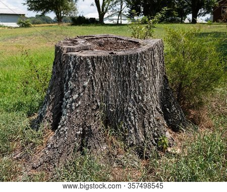 Old Tree Stump Surrounded By Grass In The Backyard Of A Farm House.