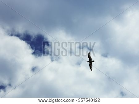A Seagull Flies In The Sky Fly