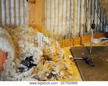 Sheep Wool Texture On Background In Farm.